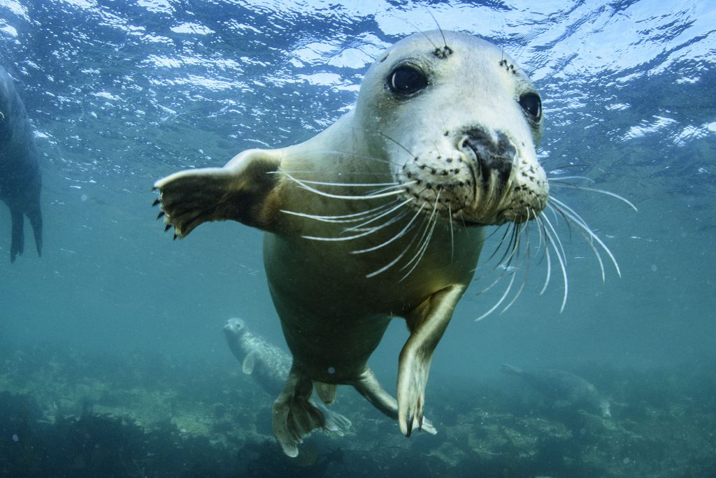 Friendly seal salsa dances