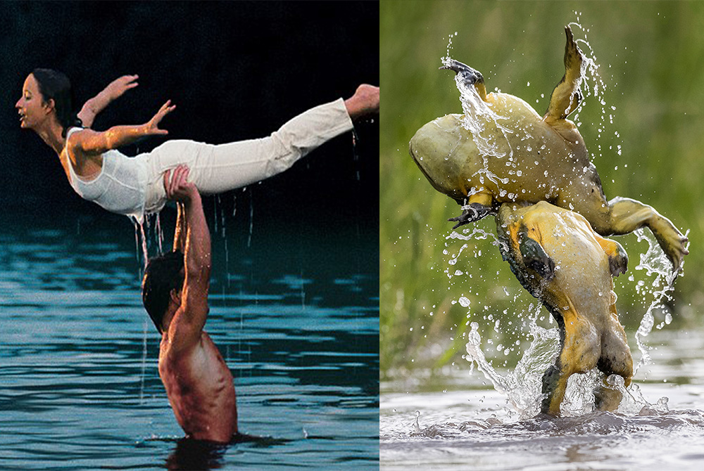 Frog Attempt Iconic Dirty Dancing Lift But Fail Miserably