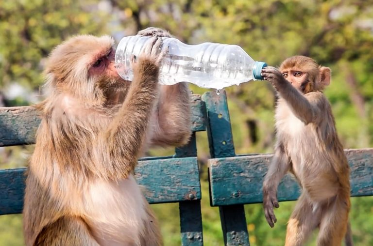 monkey with a bottle