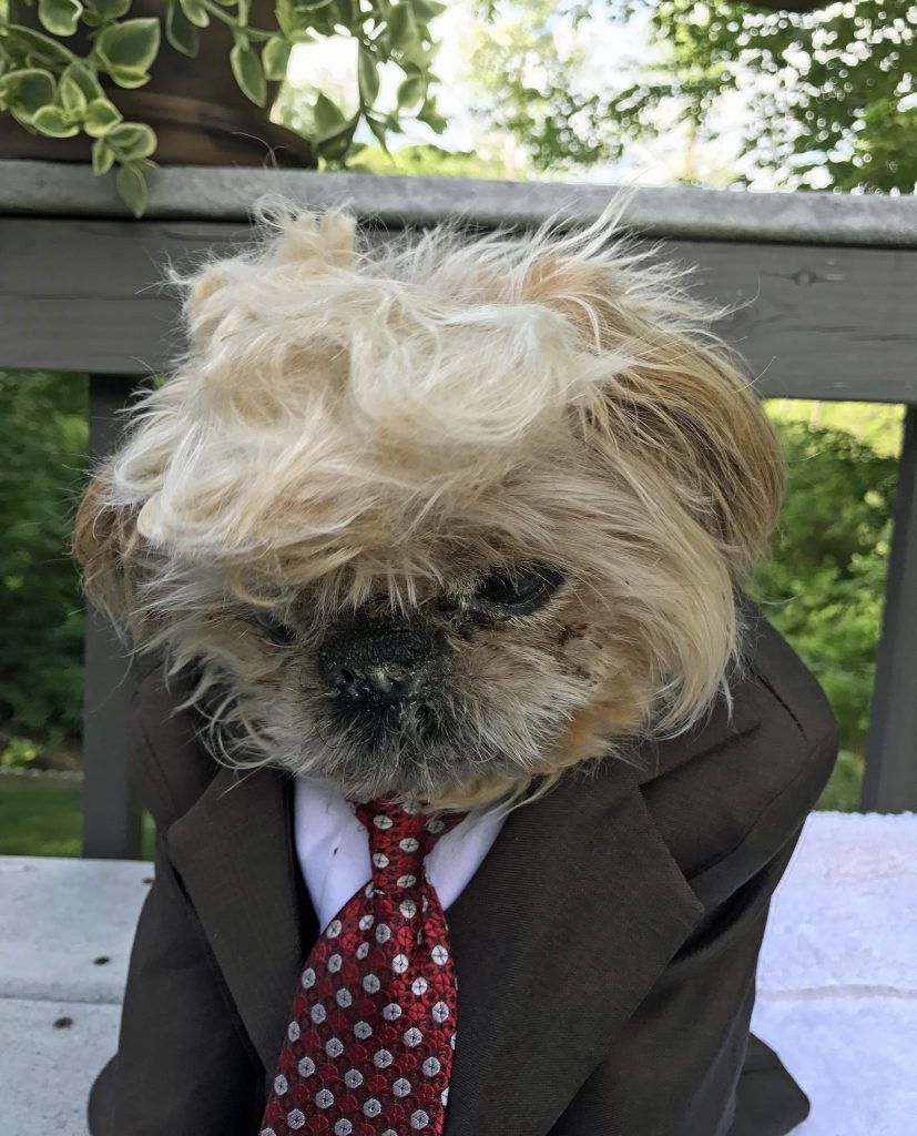 Dog Looks Like A Rug: It's Dog-ald Trump! Graduate Turns Adorable Pooch Into The