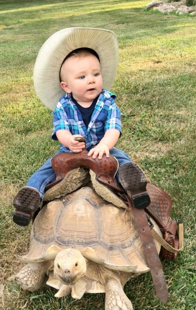 baby dressed as cowboy is keen to learn how to ride by starting