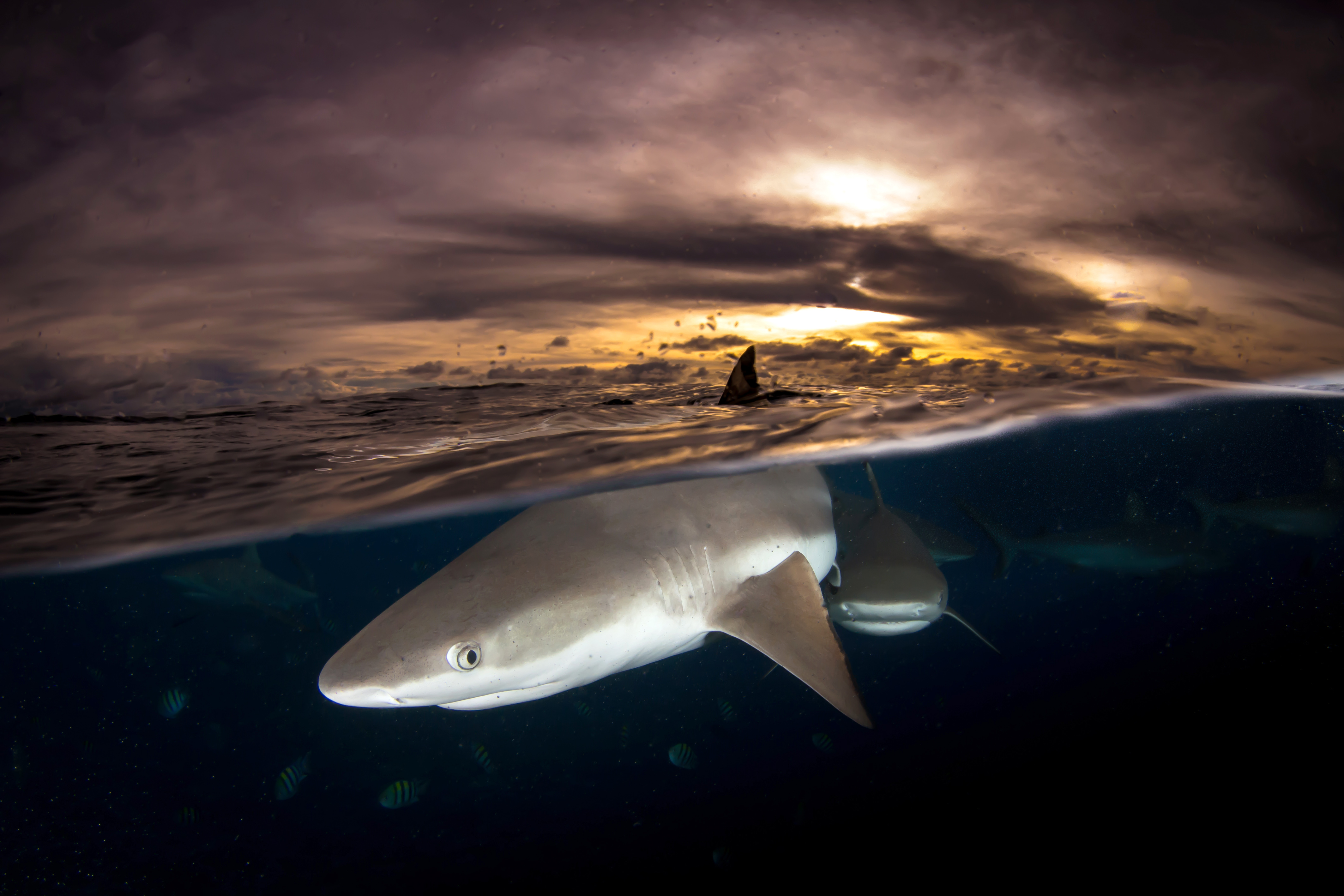 stunning shark shots show beasts above and below the water