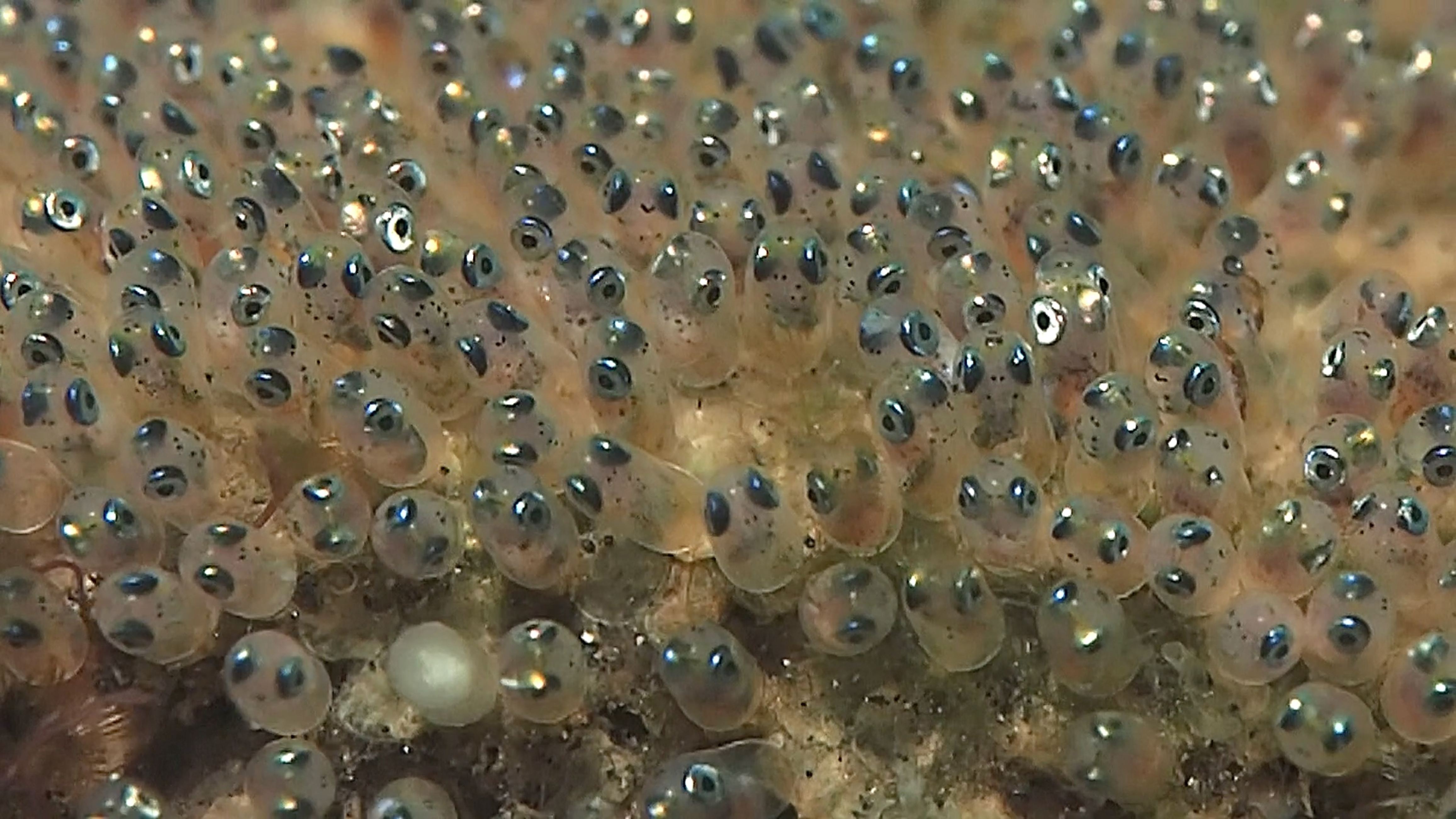 Raving fish eggs boogie together proving show it s the for Fish eggs hatching