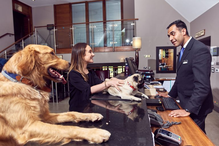 Dog friendly hotel chain gets tails wagging with luxury for Pet friendly luxury hotels