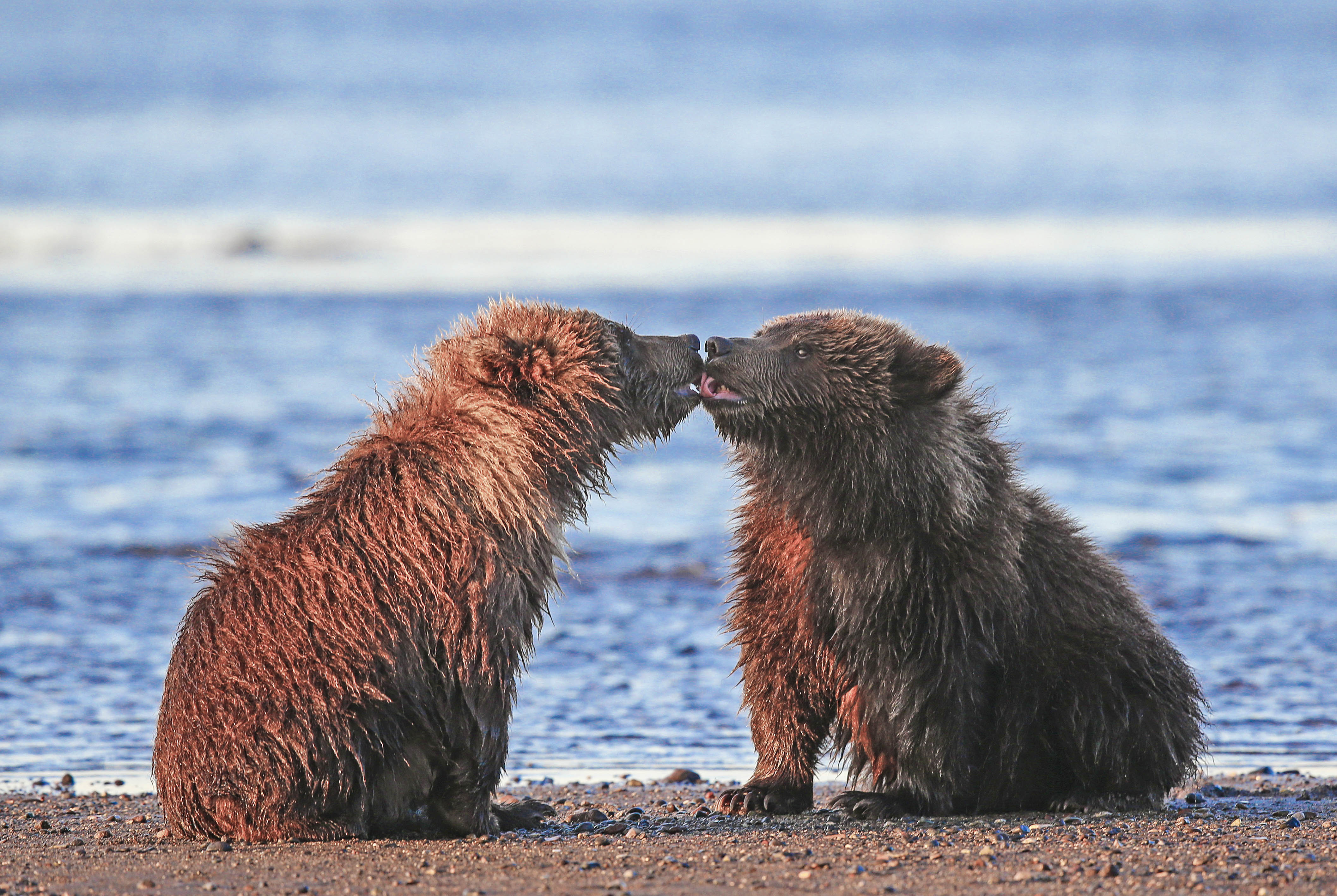 Real Life Care Bears Adorable Baby Cubs Kiss And Cuddle