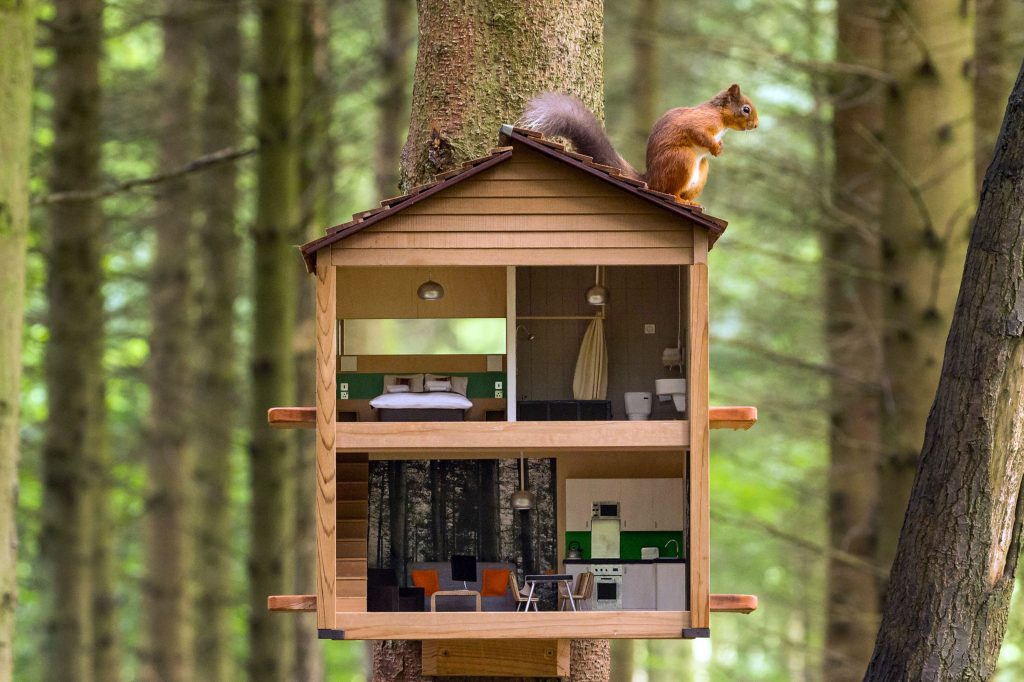Red squirrel lodge lux...