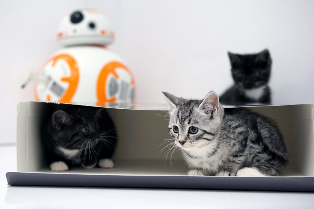 Cool Cat - Argos Play Continual Video Of Kittens On Website