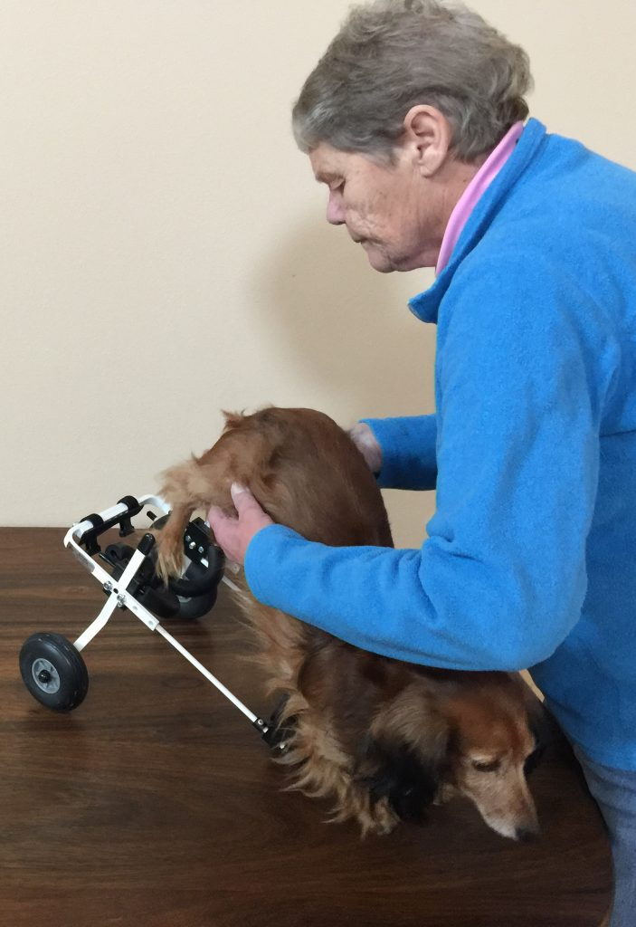 How To Make A Cart For A Paralyzed Dog