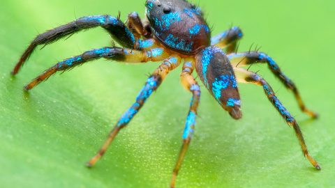 Check out these incredible close up macro photos of spiders  Image