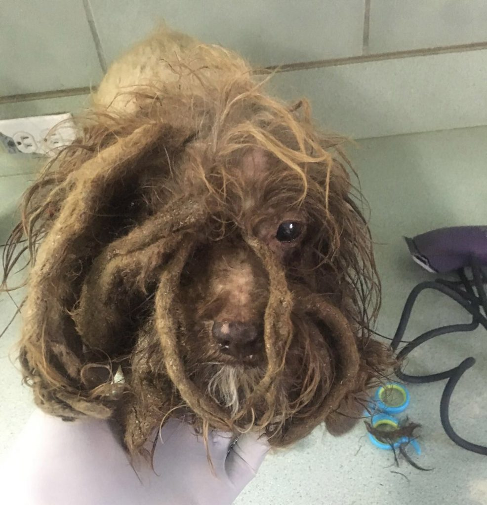 Incredible Transformation Of Dog Left With Dreads After