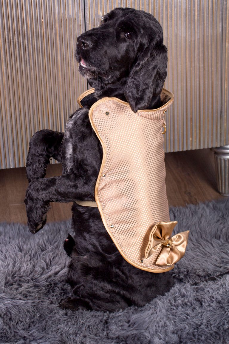 1 Million Dog Coat Is Made Of Diamonds And Gold For The Most