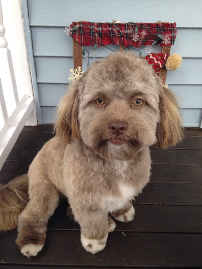 Puppy with human-look takes internet by storm – but owner ...