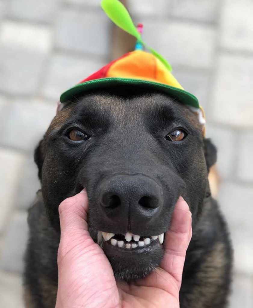 City Of El Cajon >> Police dog becomes social media sensation thanks to wonderful array of hats and goofy antics ...