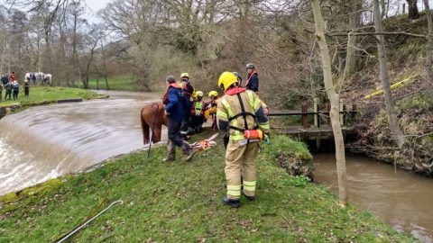 Four-legged fiasco! Racehorse rescued from river after being stranded on the edge of 12 foot weir in three hour ordeal Image