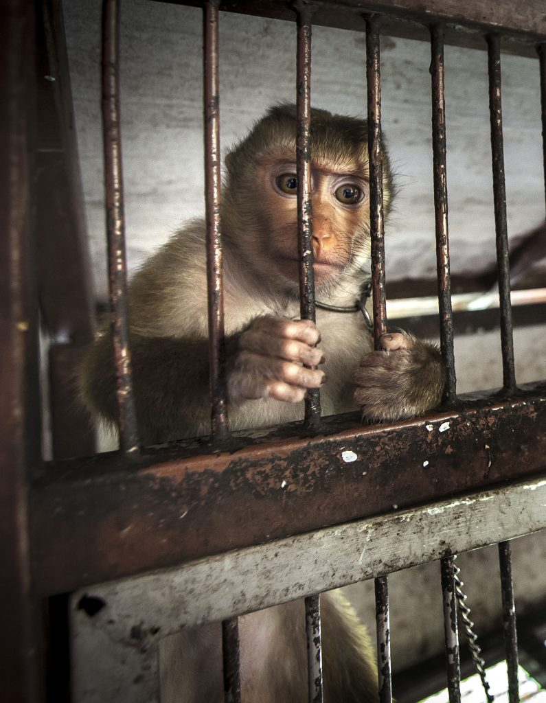 animals behind bars essay Wild animals belong to the wild and they should live in their natural habitats however regardless of the rights of the animals, it is a fact that most countries still have zoos where animals are being caged and held captive behind bars for mere human entertainment.