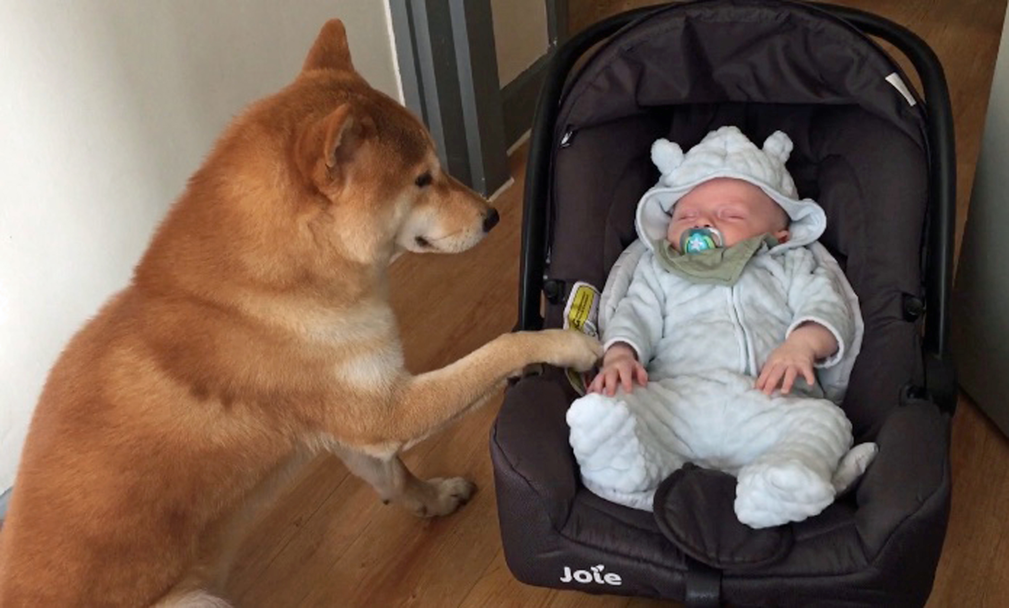 family find perfect babysitter as their dog takes on a number of