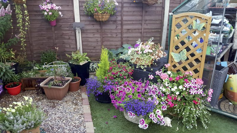 Spot the dog! Hilarious pic shows pooch completely hidden in garden - so can you see where he is? Image