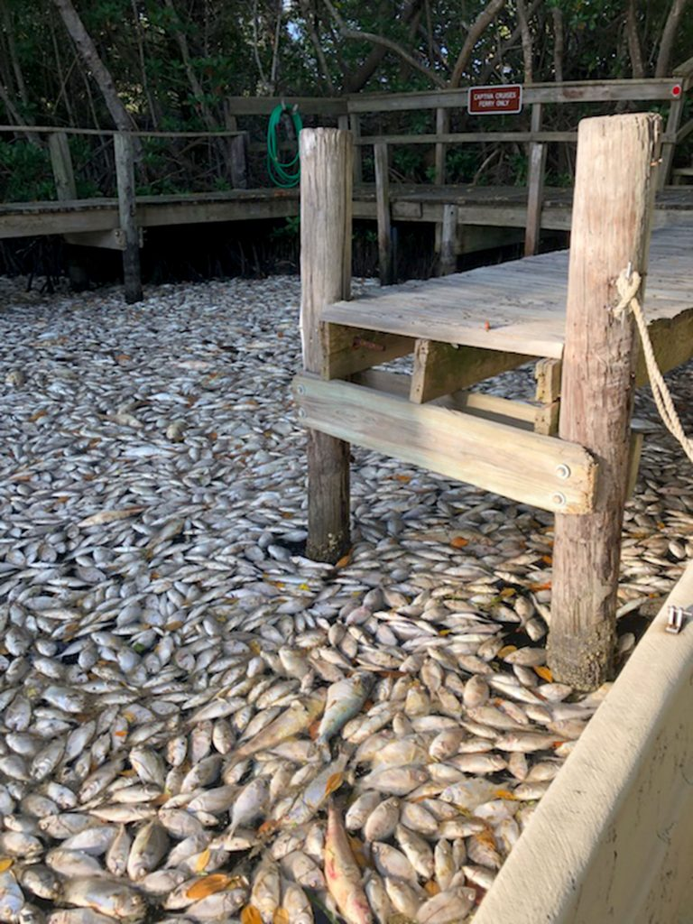 Millions of dead fish wash up on picturesque Florida beaches