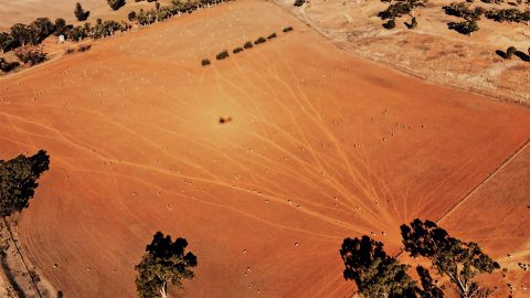 Alarming photographs show Australia turned into a barren wasteland amid devastating drought Image