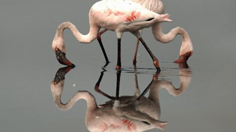Stunning mirror image shots reveal the beauty in still water Image