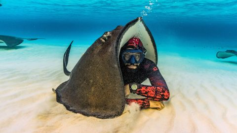 That wont stop you getting wet! Helpful stingray uses its huge body to cover freediver in remarkable seabed snap Image