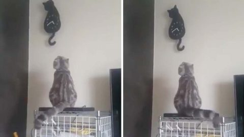 Adorable video shows cat waving its tail in time with feline shaped clock Image