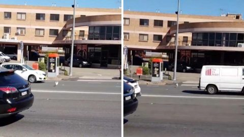 Why did the chicken cross the road? Hilarious footage shows chicken sprinting across road Image