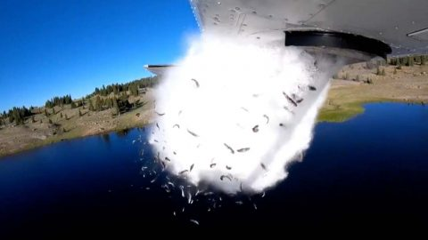 Flying fish – Bizarre footage shows fish falling from plane in hope to replenish American lakes Image