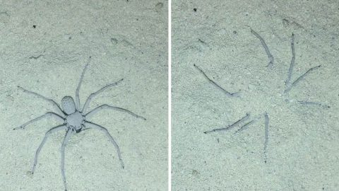 Amazing footage of a spider burying itself in the sand Image
