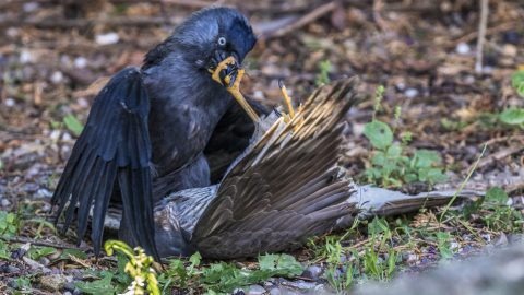 Shut your beak - dramatic images show fight between two hawks Image