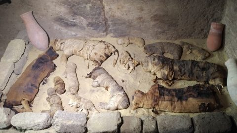 Mummy mia: Mummified animals including cats and crocodiles believed to be 6000 years old discovered at burial ground Image