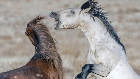You're the wrong nay-bourhood! Incredible photos show brutal horse fight Image