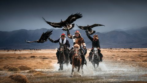 Eagle eyed! Photographer captures stunning pictures of world's last remaining Mongolian eagle keepers  Image