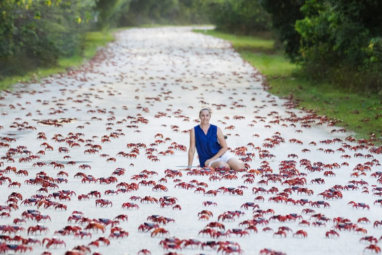 Christmas Island Crabs.A Red Sea Mum Surrounded By Millions Of Crimson Crabs As