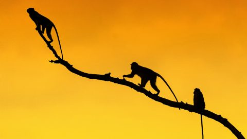 Animals photographed against the sun are instantly recognisable by their silhouettes Image