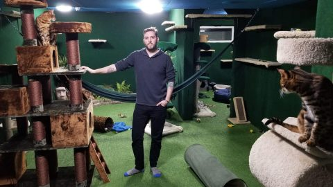 Purr-fect play area! Devoted brother spends £12,000 turning basement into ultimate cat jungle Image