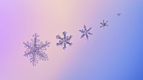 It's snow mean feat – Delicate snowflakes captured up close and personal Image
