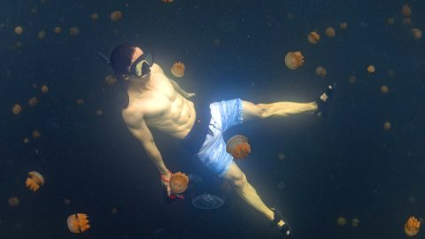 Hunk swims in jellyfish lake that looks like alien planet Image