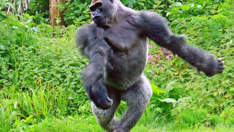 Zoo you even lift bro? Animals caught getting in shape this new year Image