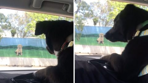 Hilarious video shows confused pooch barking at billboard of dog Image