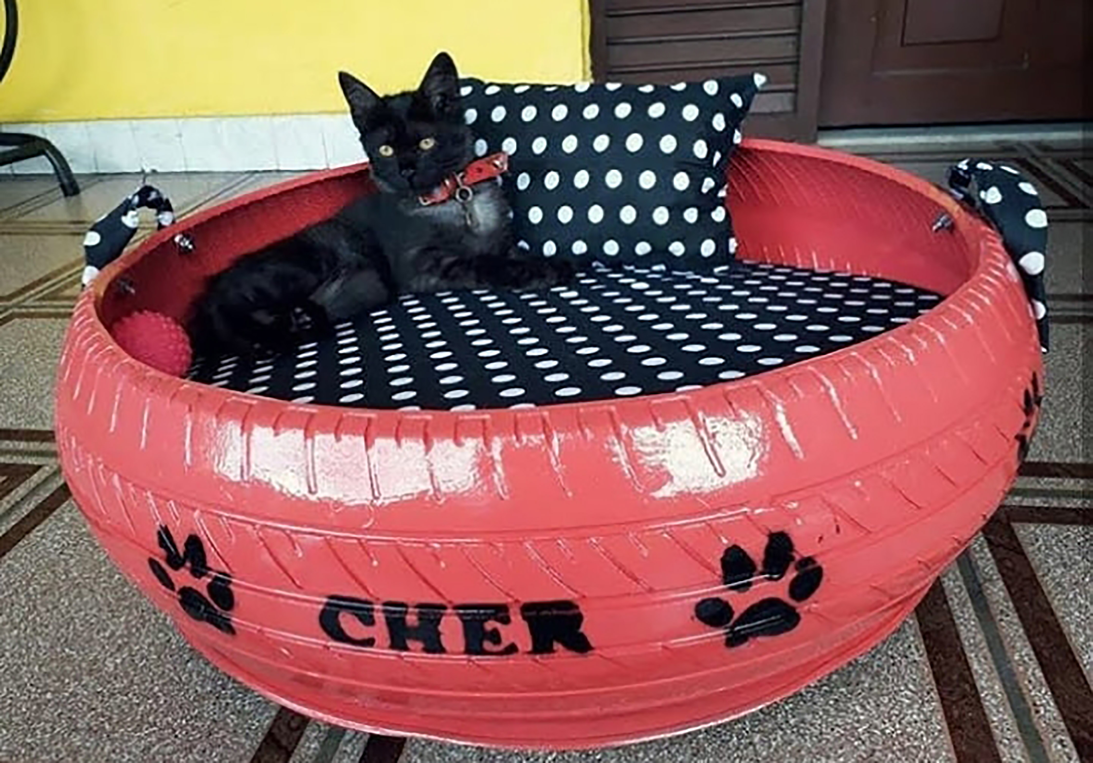 Beds For Stray Dogs And Cats
