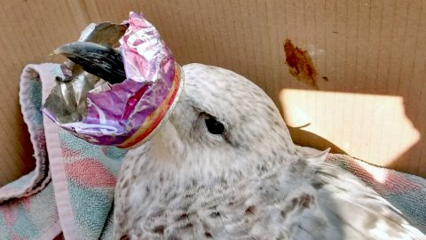 Shocking effects of plastic pollution shown by wildlife trapped in litter Image