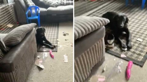 Give The Dog A Bone-R! Couple Mortified After Cheeky Pooch Rips Open Neighbour'S Parcel And Finds Huge Sex Toy Image