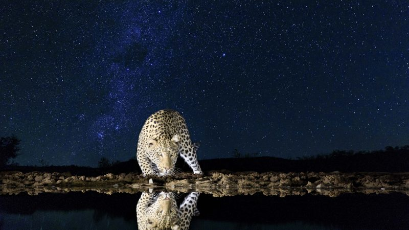 Starry Eyed Surprise! Stunning Shots Capture Animals Reflected In Water Under Twinkling Night Sky Image