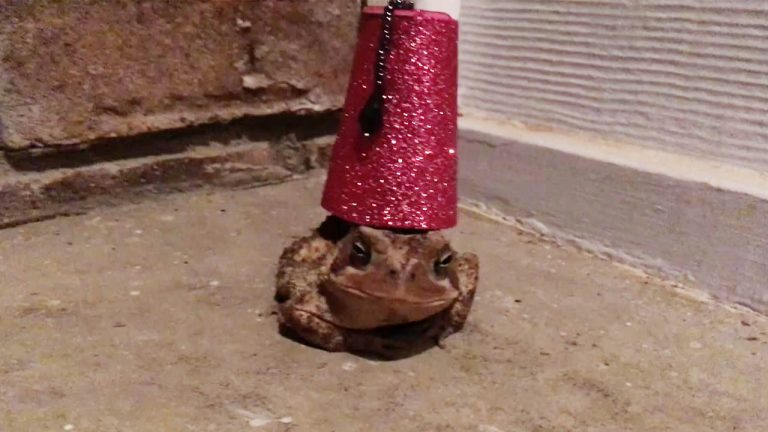 5dd44952d Creative animal lover designs tiny hat for toad - and it fit ...