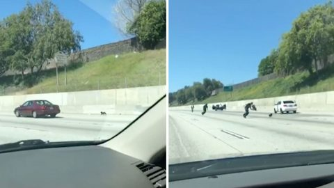 Little Black Dog Causes Havoc On Freeway By Giving Concerned Drivers The Runaround Image