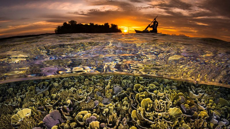 Not A Dry Eye In The House - Underwater Photographer From Across The Globe Submit Amazing Images For Contest Image