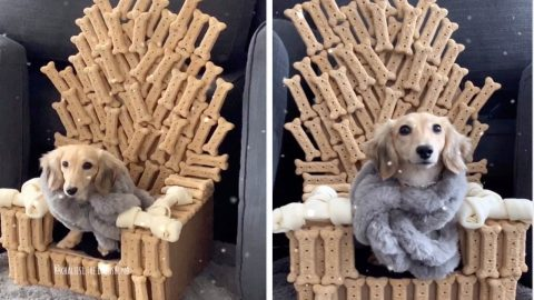 Game Of Bones: Adorable Dachshund Sits On Top Of Iron Throne Made From Bones Image