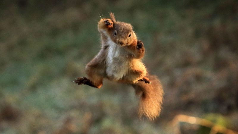These Flying Squirrel Pictures Are Nuts! Image