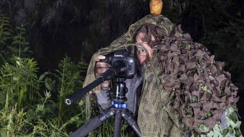 Watch The Birdie! Stunning Pics Show Awesome Moment Kingfisher Lands On Photographer's Head Image